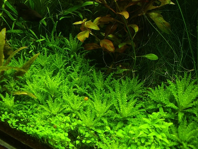 /images/product_images/info_images/pic/aquasys-element-co2-nano_2.jpg