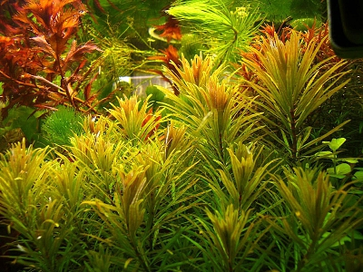 /images/product_images/info_images/pic/aquasys-fe-plus-mn-120ml_3.jpg